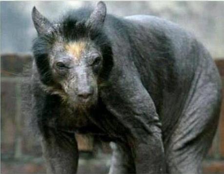 Shaven Bear jjbjorkman.blogspot.com