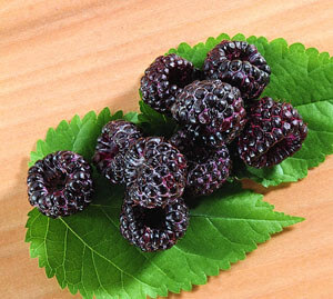 beri hitam, blackberry, black raspberry