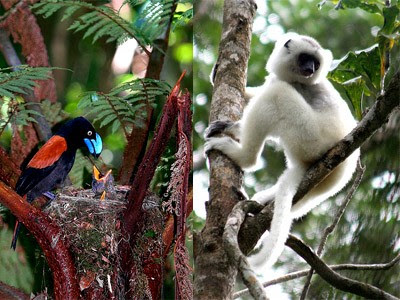 Madagascar turismo país