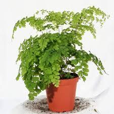 Crea vegetal les plantes dans une chambre - Plante verte dans une chambre ...