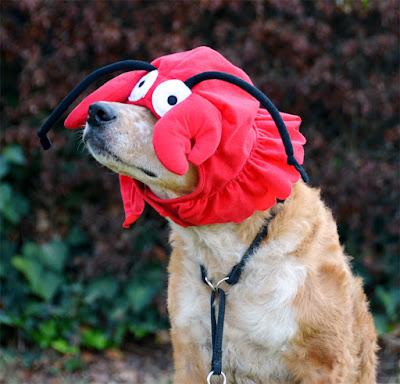 Brisbane wears the lobster hat