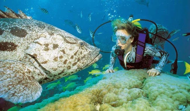Dykke Australia