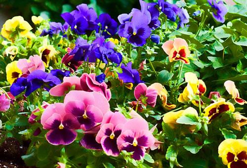flores no jardim do amor:Maíra Morem Arquitetura & Interiores: Jardim de Inverno