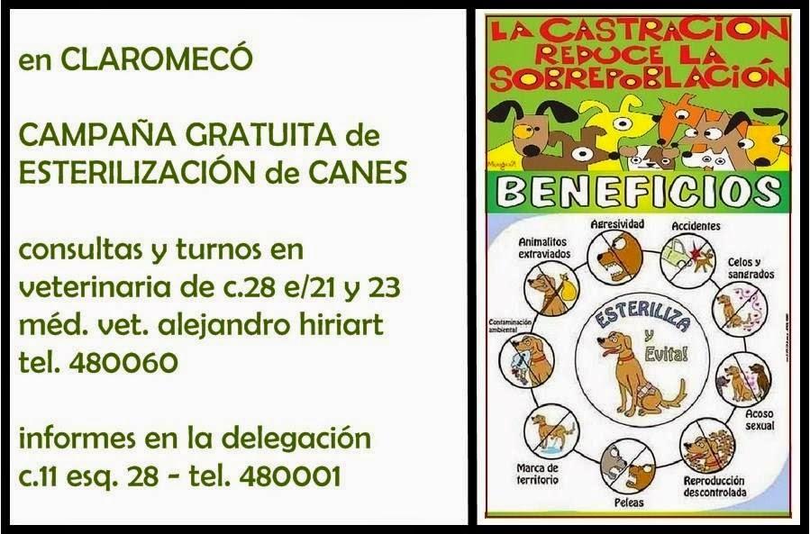claromecó, campaña 2014 de esterilización de canes