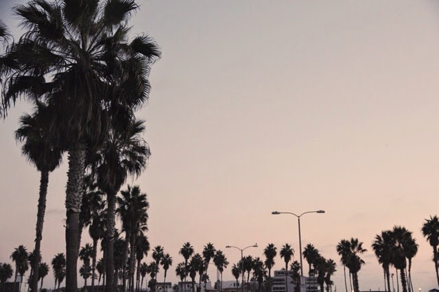 Belmont_Park_Palm_Trees