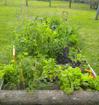 how the garden grows!