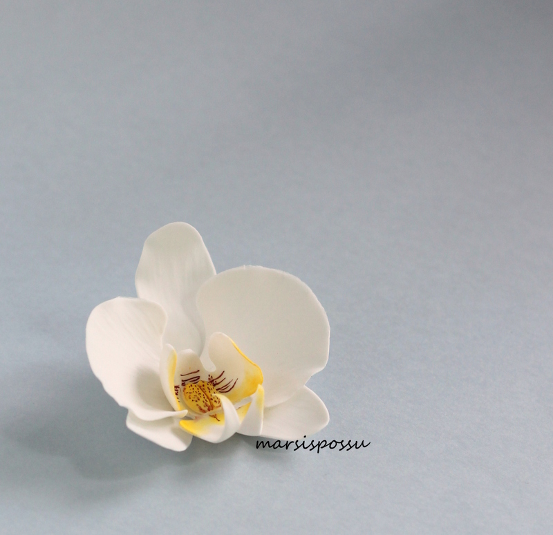 orkidea