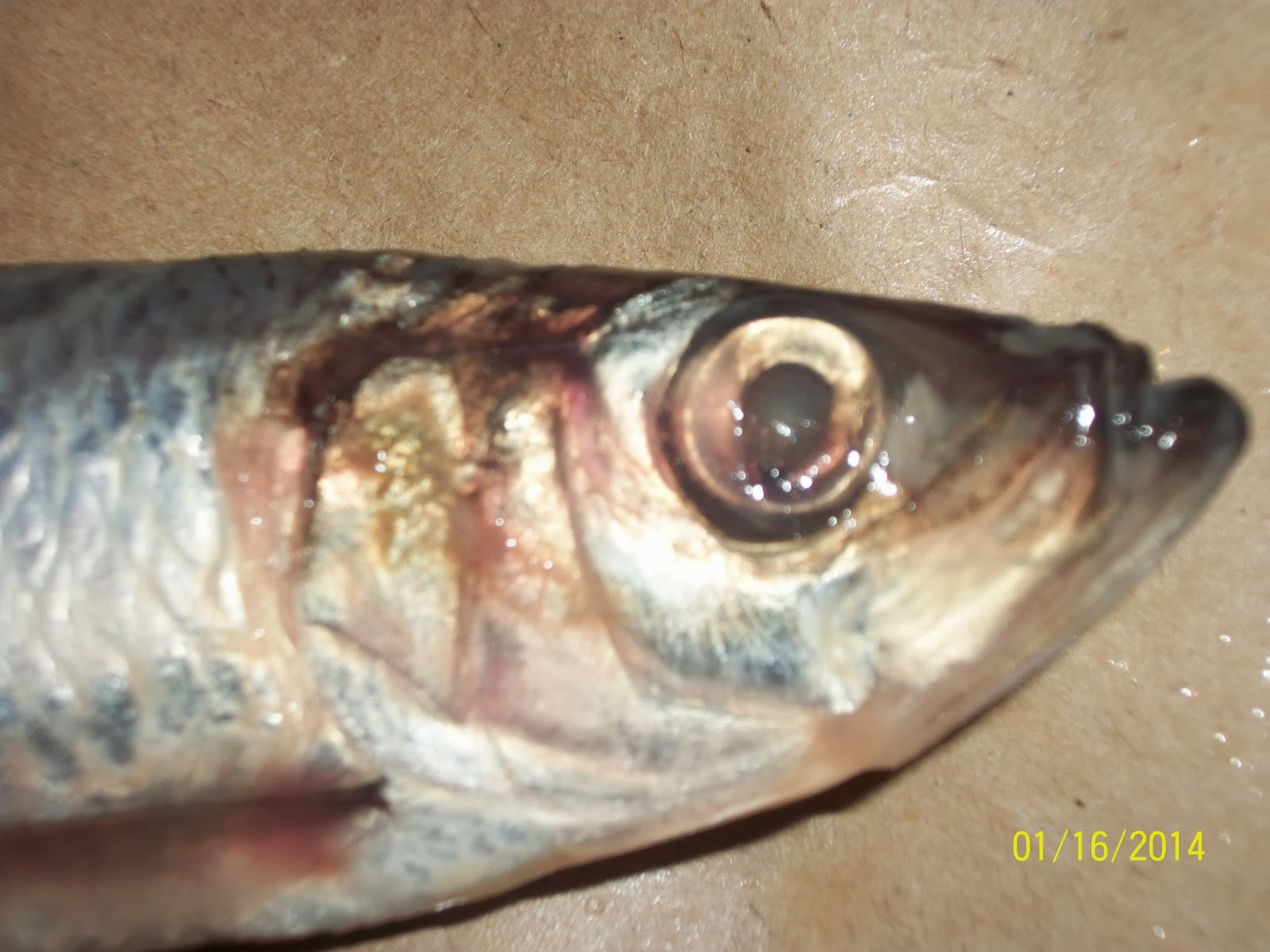 Growing in god 39 s grace answers in genesis the world of for What fish has eyelids