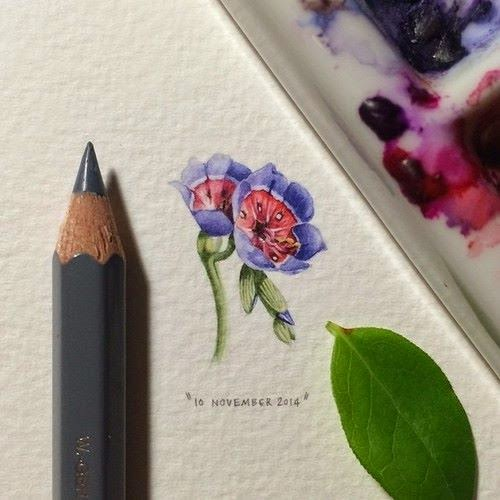 32-Geissorhiza-Radians-Lorraine-Loots-Miniature-Paintings-Commemorating-Special-Occasions-www-designstack-co
