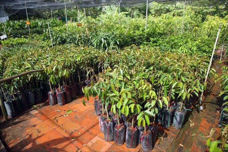 Nurseries plants developing
