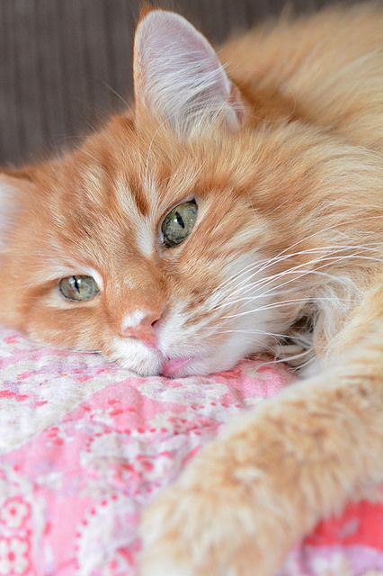 10 Cat Breeds For Dog Lovers