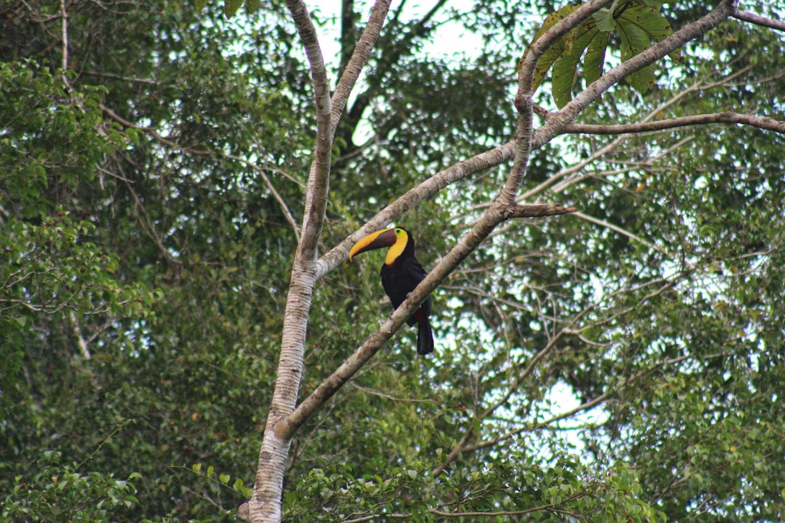 Costa Rica: Bring your camera