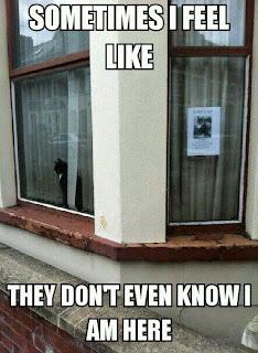 missing cat in window, lolcat, black cat