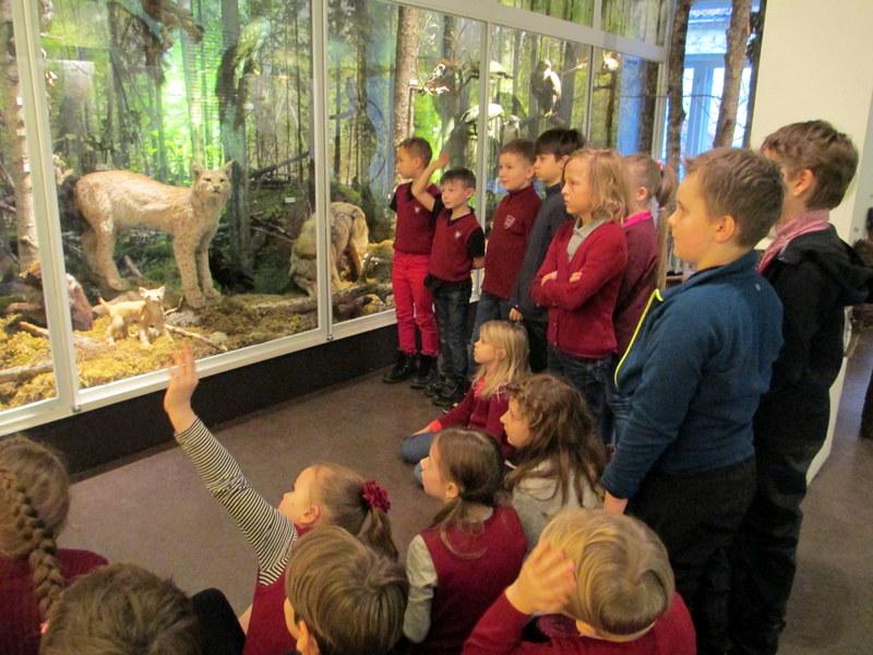 Loodusmuuseumis