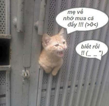 Tranh vui về Mèo
