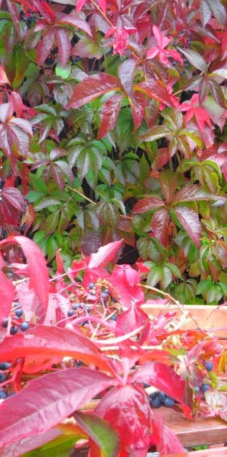 http://www.kwiatdolnoslaski.pl/2014/10/wyzwanie-tematyczne-7.html