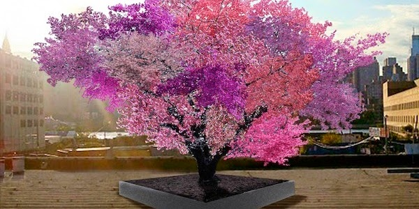 Gambar Pokok ajaib keluarkan 40 jenis buah berbeza setahun