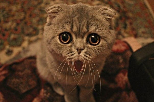 Смешные коты картинки  mirpozitivaru