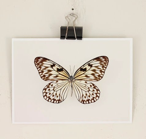 https://www.etsy.com/listing/128237993/butterfly-insect-print-natural-history?ref=favs_view_3