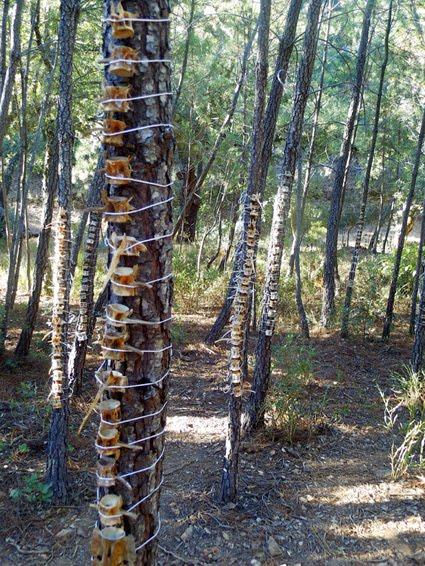 el bosque vertebrado