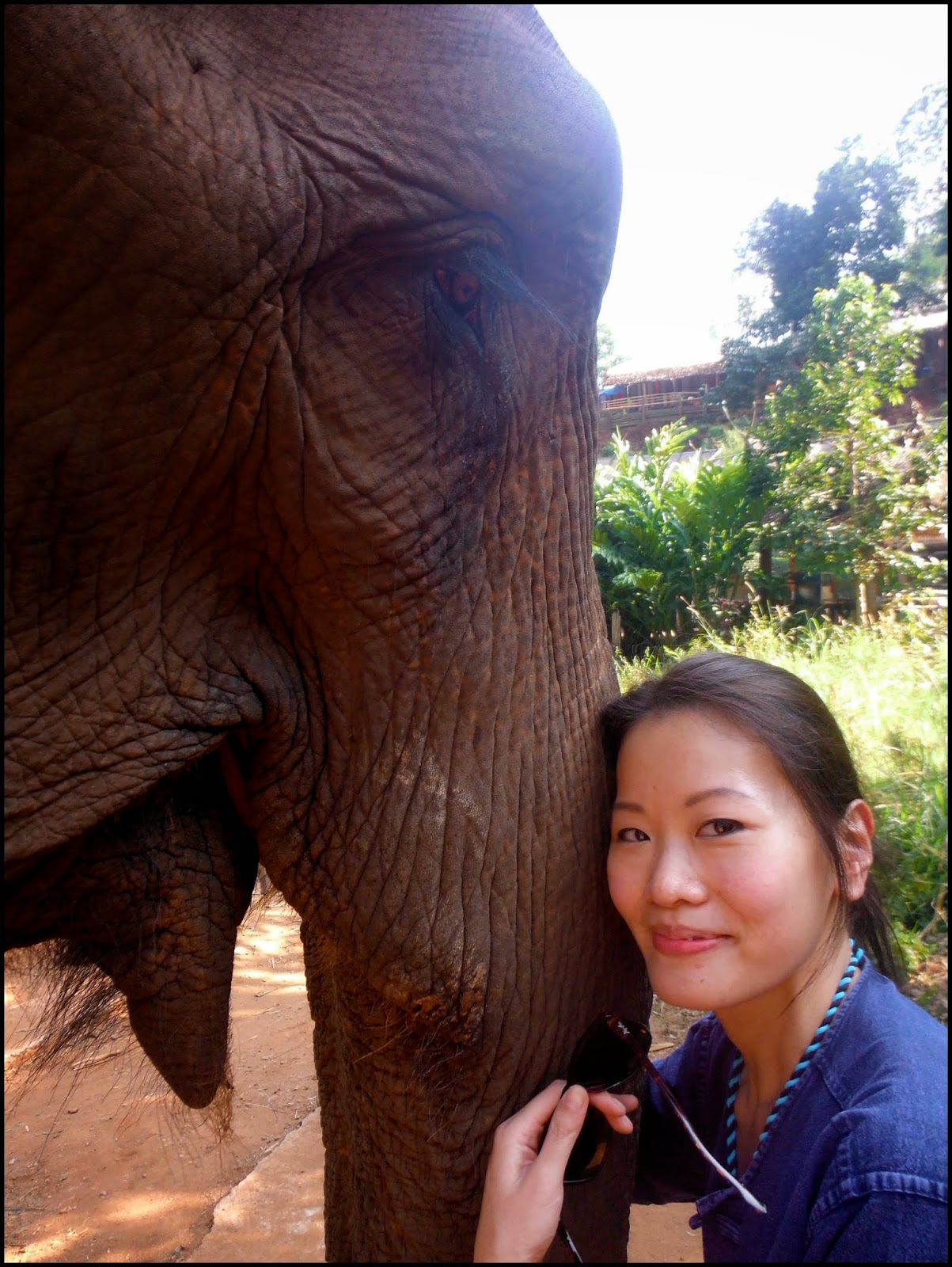 Chiang Mai Elephant Training Camp