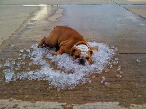 Ảnh chế nắng nóng oi bức hài bựa nhất