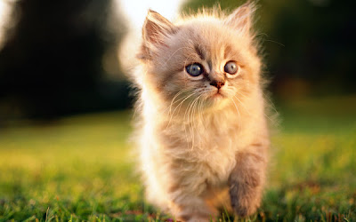 Best Top 17 Cute Cats Wallpaper Pictures Collection