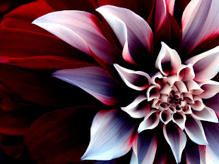 Beautiful Enigmatic Flower Love Wallpaper