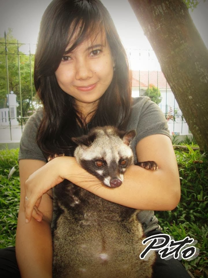 Musang Lover Indonesia