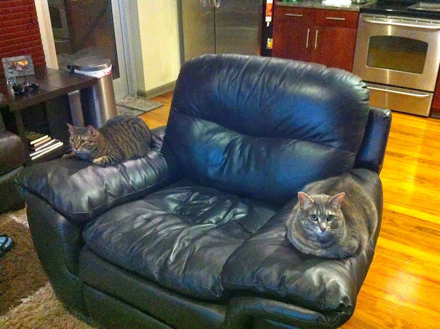 Funny cats - part 82 (40 pics + 10 gifs), cat photo, cats sit on couch hand