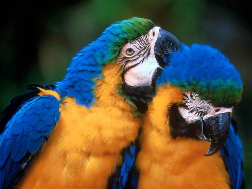 http://4.bp.blogspot.com/-gyusABeeznE/T9ce26EP1fI/AAAAAAAABEc/LO7773M0vKc/s1600/love-birds-wallpaper-b-o-ibackgroundz.com.jpg