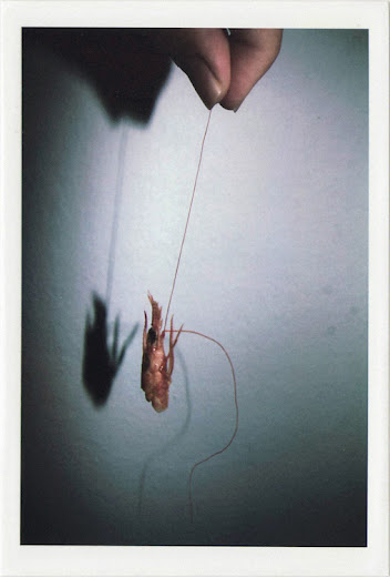 dirty photos - fumus - a photo of hand holding shrimp head