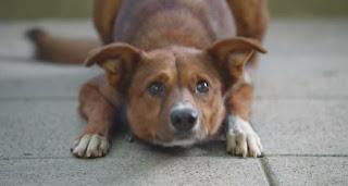 ΘΑ ΚΛΑΨΕΤΕ! Σκύλος μύρισε την καρδιά του αφεντικού του στο σώμα που την δώρισαν [video]