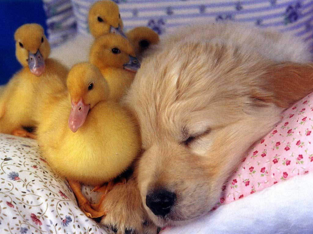 http://4.bp.blogspot.com/-gzclR04aLqE/TqKowcXLc4I/AAAAAAAAA54/W8oebshuvn0/s1600/animal_dogy.jpg