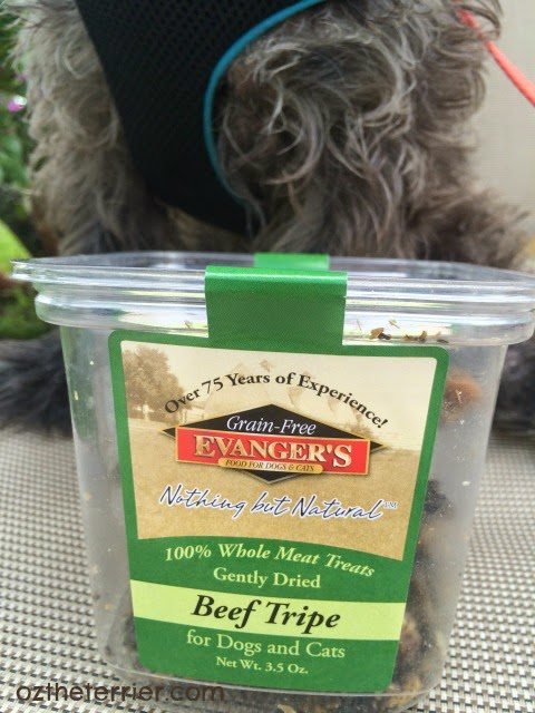 Oz the Terrier: Evanger's Beef Tripe review