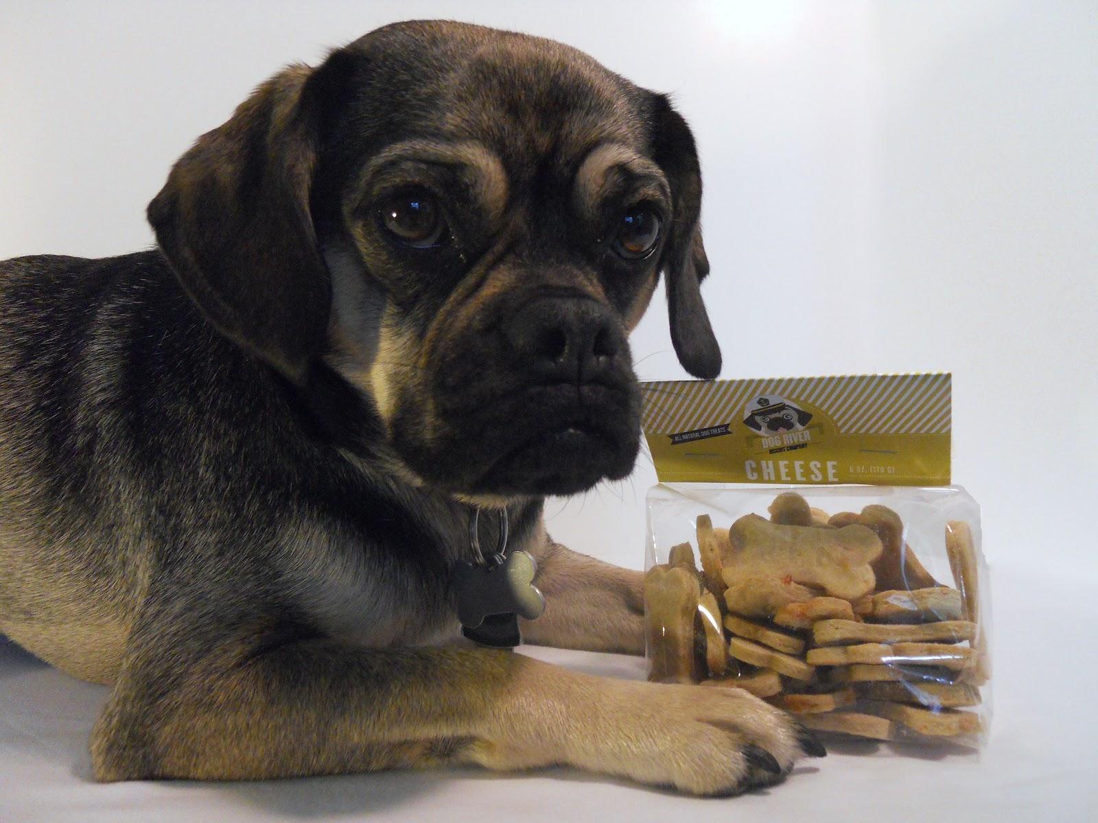 Treats Dog Company Chester