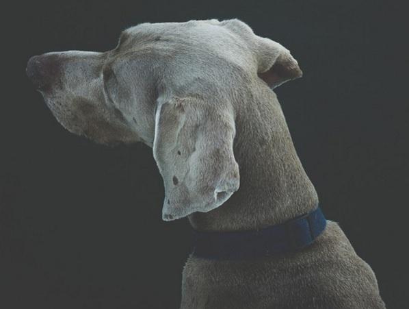 Não dê as costas para o sofrimento dos animais...