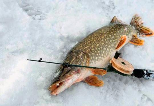 Рыбалка в глухозимье