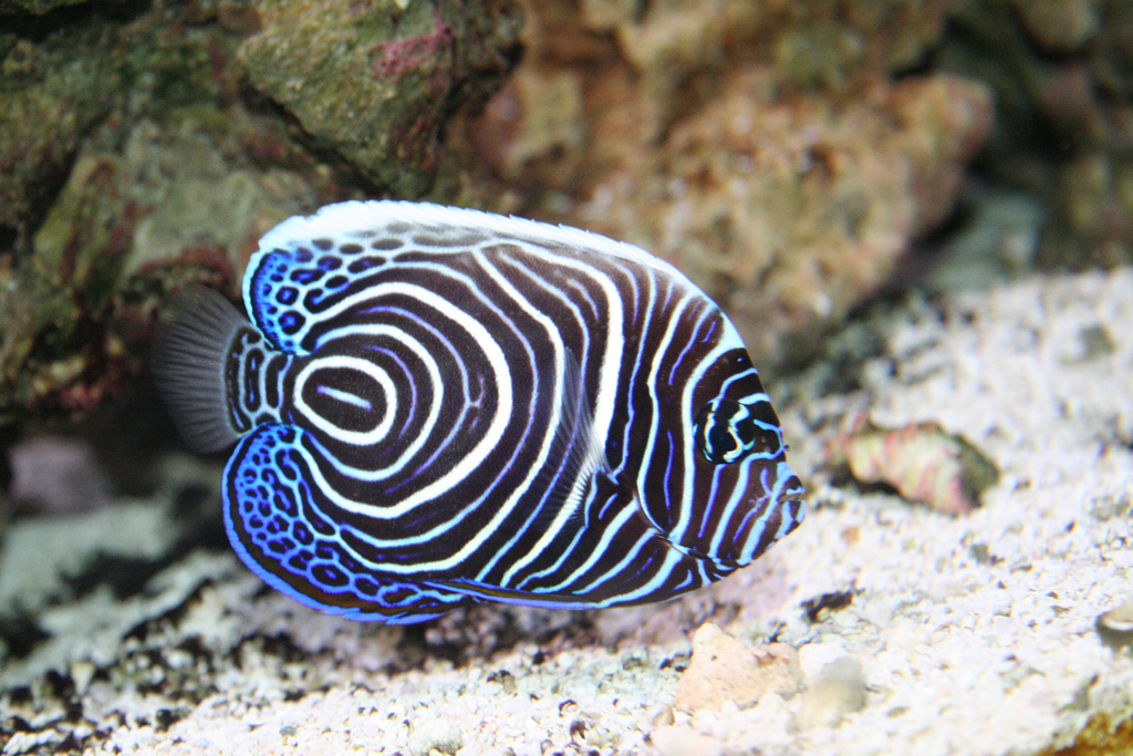 Top 10 Most Beautiful And Colorful Fish World Zoo Diary