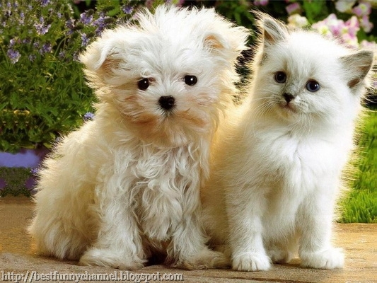 White puppy and kitten.