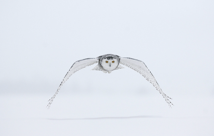 Top bensozia: Vincent Munier QM12