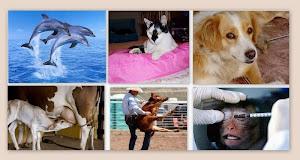 Animais Ame-os e os Deixe Viver