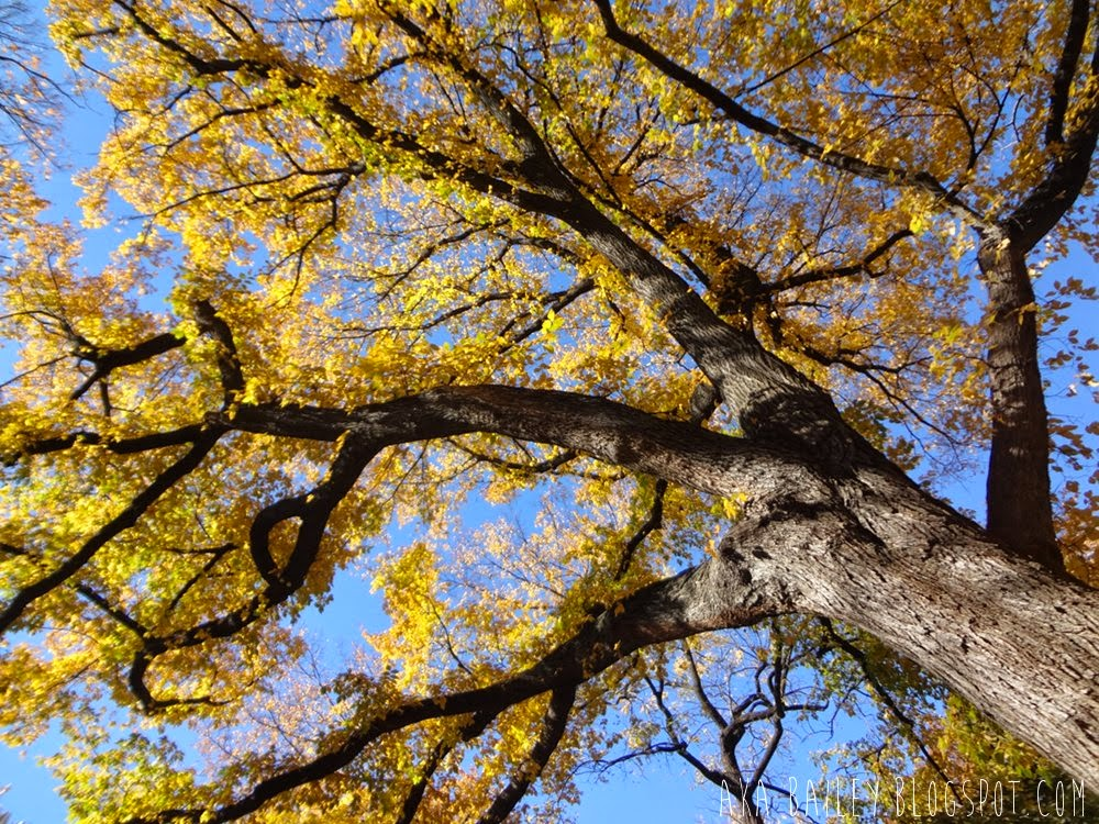 Big tree with yellow leaves in Central Park