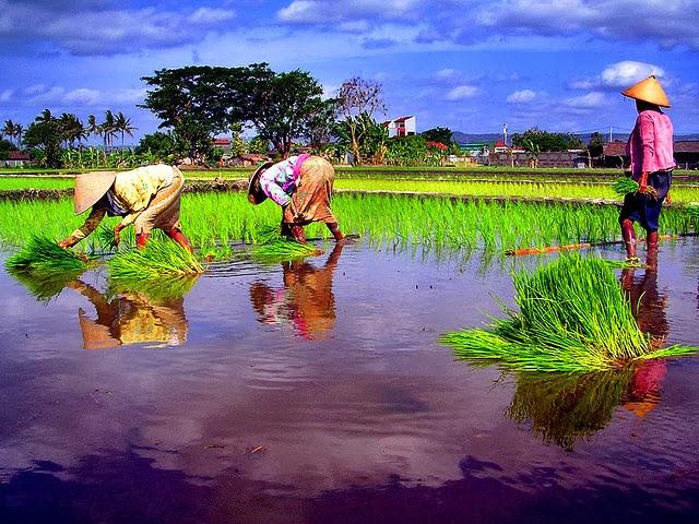 Kicau Petani di Hari Tani