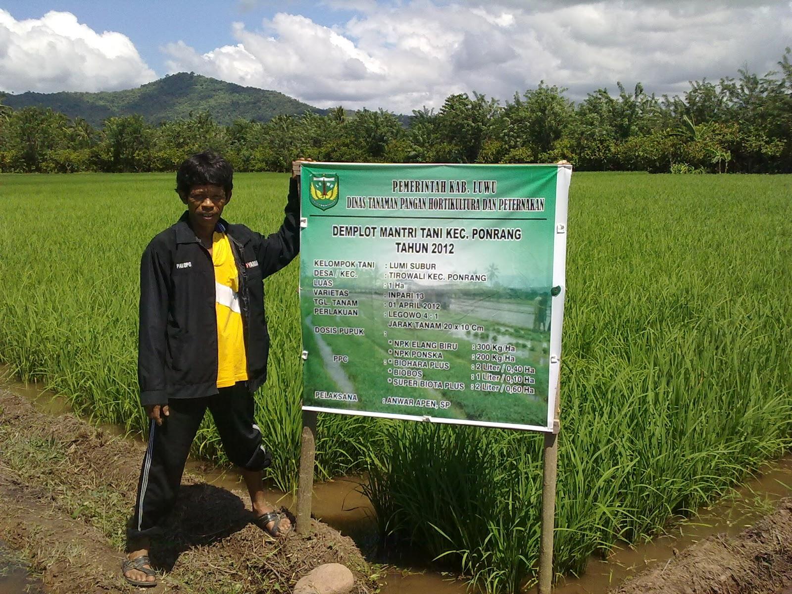 Gerbang Pertanian Luwu Demplot Mantri Tani Kec Ponrang Kab Luwu