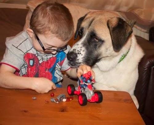 La historia de amistad entre un perro mutilado y un niño enfermo.