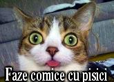 faze comice cu pisici