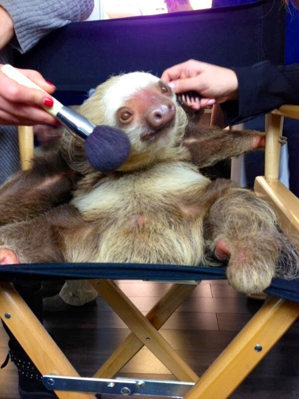 Funny animals of the week - 22 November 2013 (35 pics), sloth gets make up