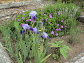 Two toned Iris and Cranesbill