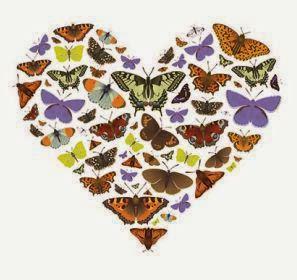 Amor a las mariposas